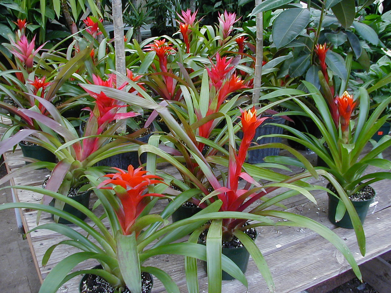 Plants for home or office - Hardy office plants ...
